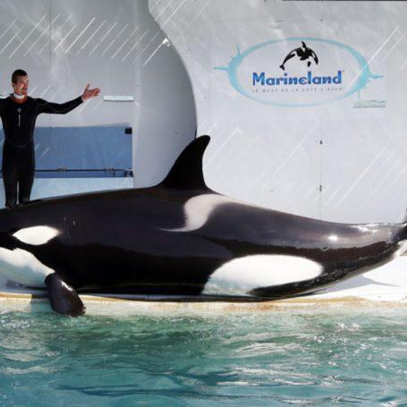 Pratende orka in Antibes