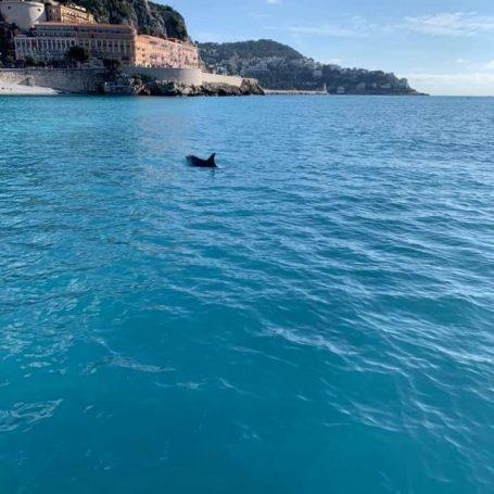 Dolfijn in de baai van Nice